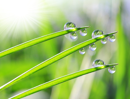 dewdrops: Fresh dewdrops on green grass
