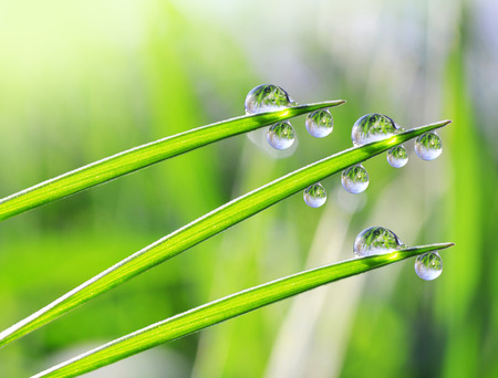 rain weather: Fresh dewdrops on green grass