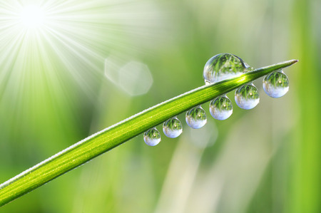 pureness: Fresh dewdrops on green grass