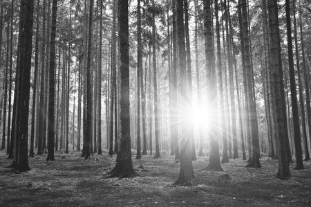 dark: Dark forest Stock Photo