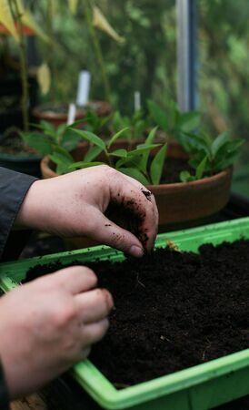 Organic Gardeners allotment Stock Photo - 8038105