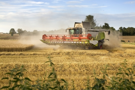 Combine Harvester harvesting wheat in Norfolk UK Stock Photo