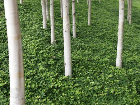 フィールドの浅い深さで森林のシーンをクローズ アップ ショット、自然、緑。
