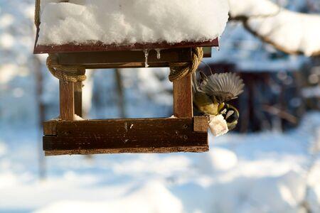 Birds on a snowy feeding trough on a sunny winter day. Birds in the winter. Birds feeding.