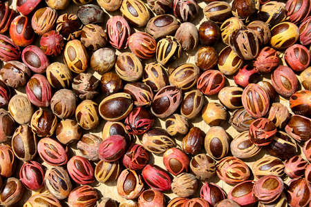 nutty: Nuts