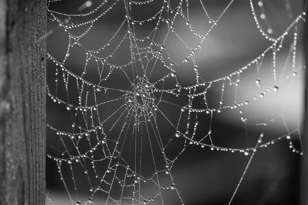 piders web covered in dew drops