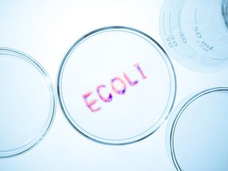 riesgo biologico: Cristalería de laboratorio biológico cultura con el crecimiento de bacterias ecoli, Escherichia coli bacteria