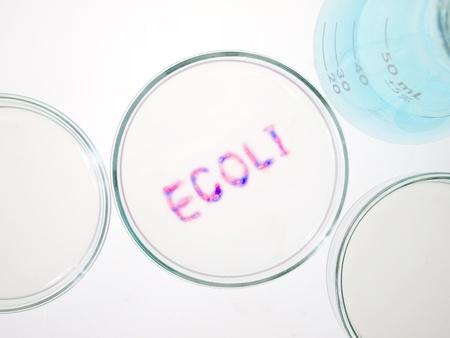 microbiology: Biological culture laboratory glassware with growing ecoli bacteria, Escherichia coli bacteria