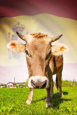 spainish: Cow with flag on background series - Spain