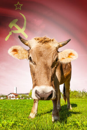 republics: Cow with flag on background series - Union of Soviet Socialist Republics