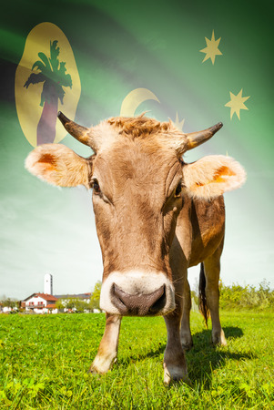 cocos: Cow with flag on background series - Cocos (Keeling) Islands