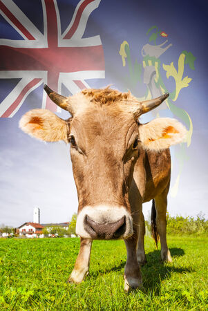 pitcairn: Cow with flag on background series - Pitcairn Group of Islands