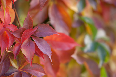 shallow: Autumn leaves with shallow focus behind it Stock Photo