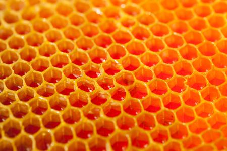 Fresh organic honey in a comb - close up shot - close up Stock Photo