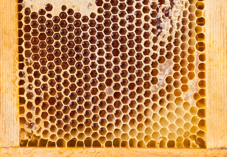 Studio close up shot of organic honey in a comb - well-being and healthy eating concept