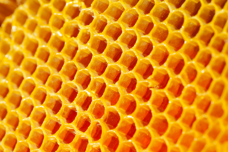 Well-being and healthy eating concept - fresh organic honey in a comb
