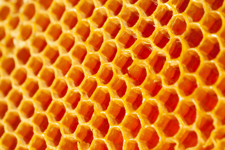 Wellbeing and healthy food series - Studio shot of fresh honey in a comb