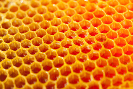 Close up shot of fresh organic honey in a comb