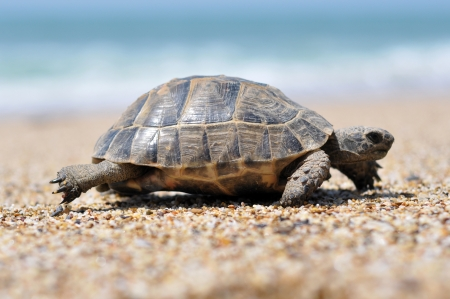 Turtle, Türkei Alanya