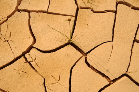 drier: Soil at the bottom of a lake that had dried up, become cracked or fracture due to the drier weather.
