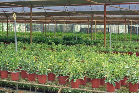 Various flowers and shrub inside plant nursery photo
