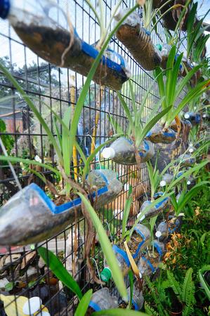 envases de plástico: La plantación de flores y verduras en recipientes de plástico que han sido reutilizadas. Fue ahorcado como un jardín vertical.