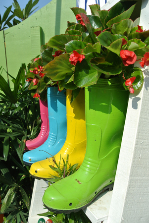 creatively: Planting flowers and vegetables creatively in old plastic boots that have been reused.