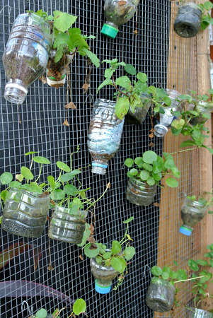 Planting flowers and vegetables in plastic containers that have been reused. It was hanged as a vertical garden. Standard-Bild