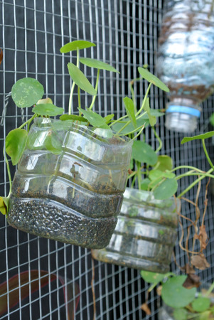 plastic to containers: Planting flowers and vegetables in plastic containers that have been reused. It was hanged as a vertical garden. Stock Photo