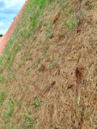 Permanent slope protection using the close turfing method to prevent erosion. The selected type of grass used for the method. The grass also stabilizes the slope structure.
