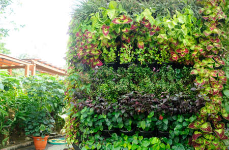 Flowers and vegetable planting in plastic pots. It was hanged vertically like a vertical garden. Save space and suitable for the urban garden.