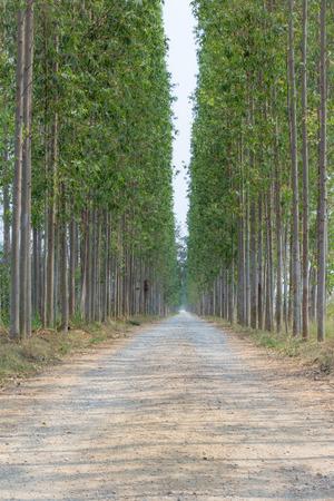 long way: Nature long way narrow and deep by the trees.