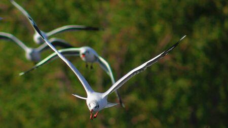 Birds flying freely