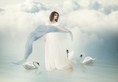 white swans photo