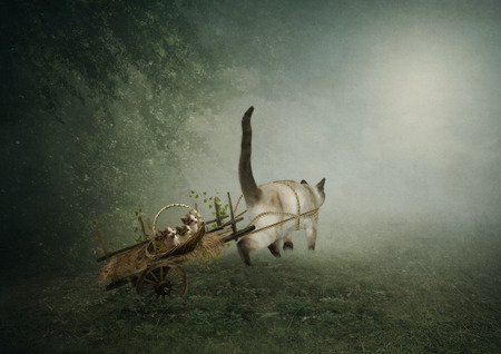 malice: Mama cat pulls the old cart with kids kittens from human malice