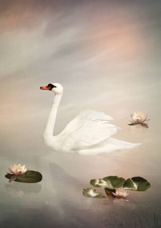 White swan floating in a pond among the pink lilies Stock Photo