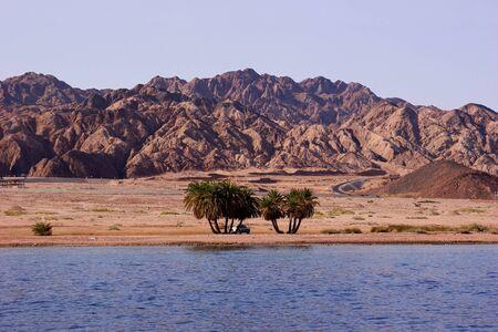 monte sinai: Dos grupos de palmeras y un coche en la playa a los antecedentes del desierto y las monta�as Foto de archivo