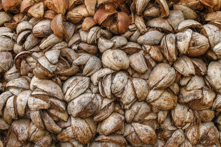 husks: Abstract shot of coconut husks with diffeent brown tones