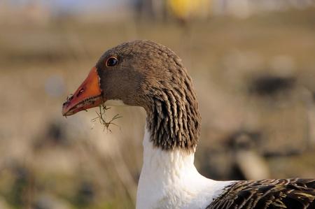 ornithology: ornithology,