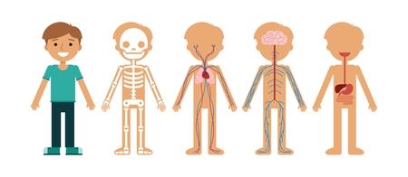 Boy body anatomy vector illustration. Human skeleton, circulatory system, nervous system and digestive systems.