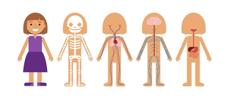 Girl body anatomy vector illustration. Human skeleton, circulatory system, nervous system and digestive systems.