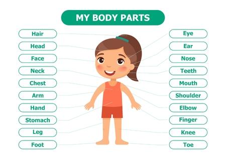 Meine Körperteile - Anatomie für Kinder. Cartoon-Vektor-Illustration. Karte für das Lehrmittel. Für den Einsatz in Animation, Anwendungen, Drucken.