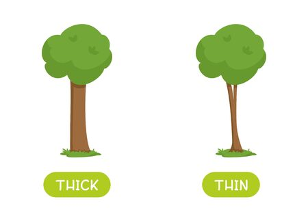 Antonyms concept, THICK and THIN. Educational flash card with trees of different thicknesses template. Word card for english language learning with opposites. Flat vector illustration with typography