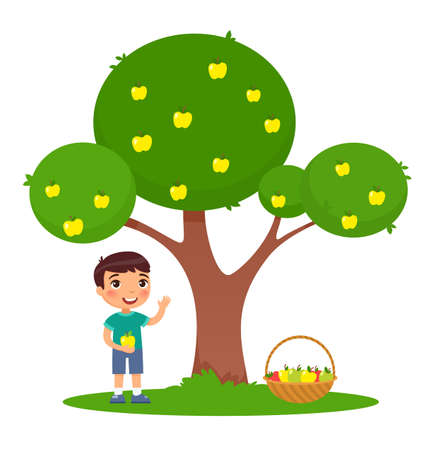 Little boy picking apples flat vector illustration. Adorable child standing under apple tree with basket. Smiling, happy kid harvesting fruits isolated cartoon color character on white background 일러스트