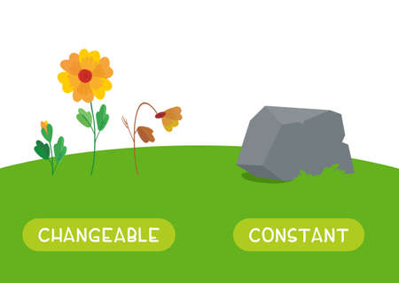 Changeable and constant antonyms word card vector template. Flashcard for english language learning. The stages of growth and wilting of a flower and a stone as something that does not change. Illusztráció