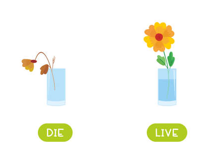 Die and live antonyms word card vector template. Opposites concept. Flashcard for english language learning. Dead wilted flower, flowering plant. Illusztráció
