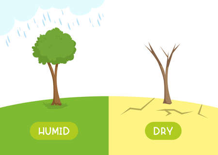 Humid and dry antonyms word card vector template. Opposites concept. Flashcard for english language learning. The tree is pouring rain, the plant is withered in the desert.