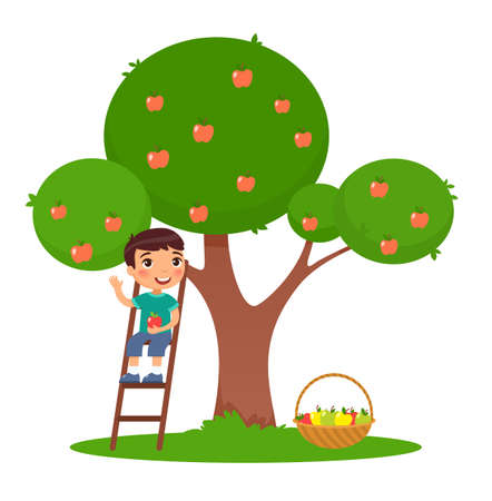 Little boy picking apples flat vector illustration. Adorable child on ladder near apple tree in garden. Smiling, happy kid harvesting fruits isolated cartoon color character on white background