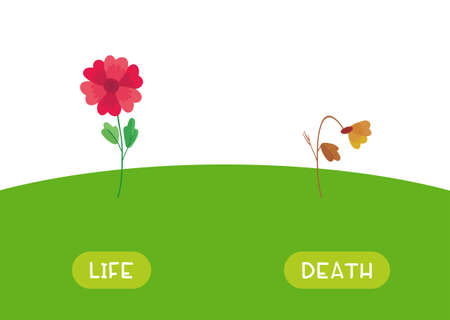 LIFE and DEATH antonyms word card vector template. Flashcard for english language learning. Opposites concept. The flower is blooming, the plant has withered.