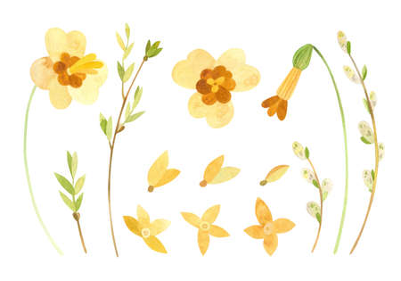 Clipart set with spring flowers - daffodils, forsythia and pussy-willow.  Watercolor clipart on white background Фото со стока - 163153034